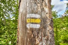 Chiuda su di una marcatura della traccia di escursione dipinta sull'albero Fotografia Stock Libera da Diritti