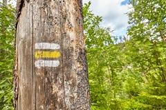 Chiuda su di una marcatura della traccia di escursione dipinta sull'albero Immagini Stock