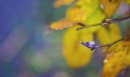 Chiuda su di una piccola lumaca sul ramo di albero di autunno Immagine Stock Libera da Diritti