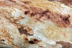 Chiuda su di vecchia corteccia di albero strutturata Immagini Stock Libere da Diritti