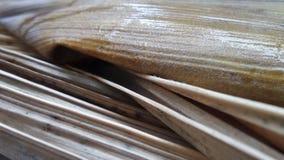 Chiuda su e struttura delle gocce di acqua della pioggia sulla vecchia foglia di palma di decadimento nel parco Fotografie Stock