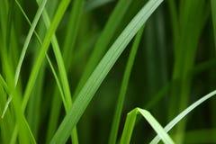 Chiuda su erba immagine stock