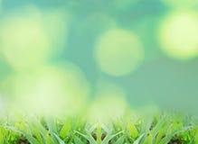 Chiuda su erba verde Immagini Stock