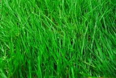 Chiuda su erba verde fotografie stock libere da diritti