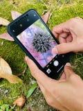 Chiuda su femminile con il telefono della macchina fotografica che fotografa i semi sulla foglia asciutta fotografia stock