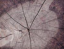 Chiuda su grano di legno del ceppo di albero con le crepe, struttura naturale dei ceppi di legno fotografia stock libera da diritti