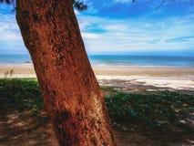Chiuda su legname accanto all'oceano nel tempo di vacanza immagini stock