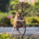 Chiuda su monky immagini stock libere da diritti
