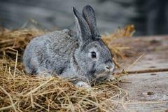Chiuda su nella vista superiore di giovane fronte sveglio del ` s del coniglio Immagine Stock