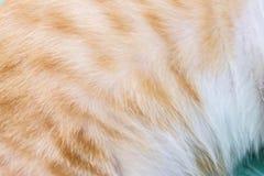 Chiuda su pelliccia del gatto che è un allergene Immagine Stock Libera da Diritti