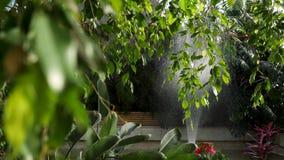 Chiuda su per le belle foglie verdi di un albero con una macchina che innaffia le piante sui precedenti, concetto di giardinaggio archivi video