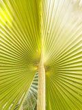Chiuda su permesso della palma fotografia stock