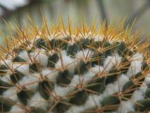 Chiuda su struttura del cactus Immagine Stock Libera da Diritti