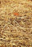 Chiuda su struttura del pagliaio del fieno, fondo dell'agricoltura Fotografia Stock Libera da Diritti