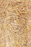 Chiuda su struttura della paglia, fondo dorato naturale secco del fieno Immagine Stock Libera da Diritti