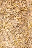 Chiuda su struttura della paglia, fondo dorato naturale secco del fieno Fotografia Stock Libera da Diritti