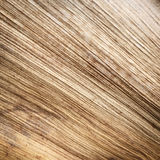Chiuda su struttura di foglia di palma secca Fotografie Stock