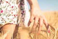 Chiuda su su un grano commovente della mano della donna in un campo Immagini Stock