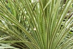 Chiuda su sul cactus spinoso Fotografia Stock Libera da Diritti