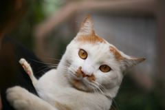 Chiuda su sul fronte del ` s del gatto fotografie stock libere da diritti