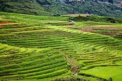 chiuda su sul giacimento verde intenso del riso, il PA del Sa, Vietnam Fotografie Stock
