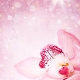 Chiuda su sull'orchidea rosa su fondo blured Immagini Stock Libere da Diritti