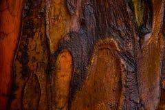 Chiuda su sulla corteccia di albero rossa Fotografia Stock