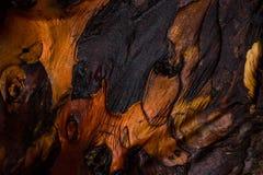 Chiuda su sulla corteccia di albero rossa Fotografie Stock