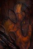 Chiuda su sulla corteccia di albero rossa Fotografia Stock Libera da Diritti