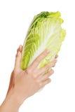 Chiuda su sulla mano femminile che tiene un cavolo Immagine Stock