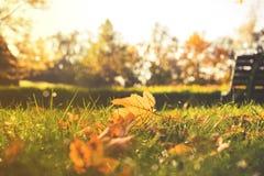 Chiuda su sulle foglie di autunno nel parco Fotografia Stock
