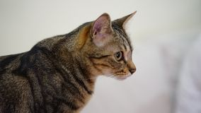 Chiuda su un gatto sparato immagini stock libere da diritti