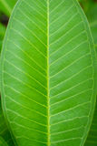 chiuda sugli alberi e sulla pianta verdi della foglia Immagine Stock