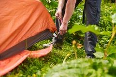 Chiuda sui bastoni delle mani del ` s dell'uomo un piolo in terra mentre installano una tenda nella foresta Fotografie Stock