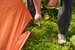 Chiuda sui bastoni delle mani del ` s dell'uomo un piolo in terra mentre installano una tenda nella foresta Immagini Stock