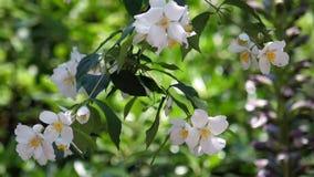 Chiuda sui bei fiori gialli bianchi video d archivio