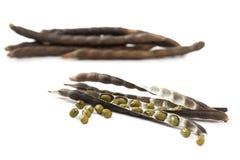 Chiuda sui fagiolini sul baccello su fondo bianco Fotografia Stock