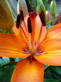 Chiuda sui fiori immagini stock libere da diritti