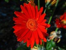 Chiuda sui fiori fotografia stock libera da diritti