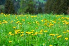 Chiuda sui fiori in bello giardino in montagna della collina Fotografia Stock