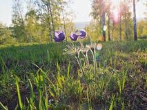 Chiuda sui fiori della molla Fotografia Stock