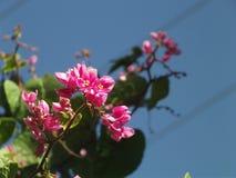 Chiuda sui fiori di rosa dello zoom fotografia stock