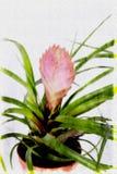 Chiuda sui fiori rossi variopinti illustrazione di stock