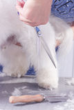 Chiuda sui peli della pelliccia del cane di forbici Fotografie Stock Libere da Diritti