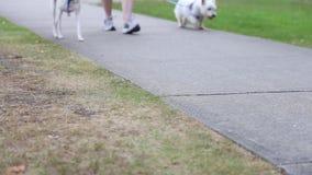 Chiuda sui piedi del cane e della gente Fotografie Stock