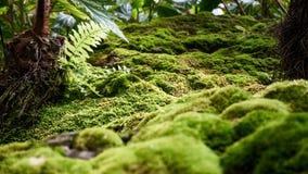 Chiuda sul bello MOS di verde sul pavimento fotografia stock