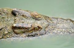Chiuda sul coccodrillo Immagini Stock Libere da Diritti