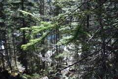 Chiuda sul colpo degli alberi con un ramo come il punto focale Fotografia Stock