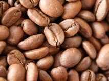 Chiuda sul colpo dei chicchi di caffè freschi immagini stock libere da diritti