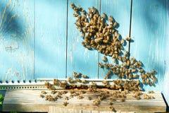 Chiuda sul colpo delle api sull'arnia Fotografia Stock Libera da Diritti